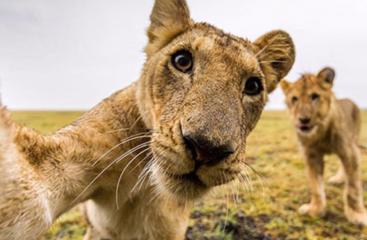 The Fastest 25 Animals in the World